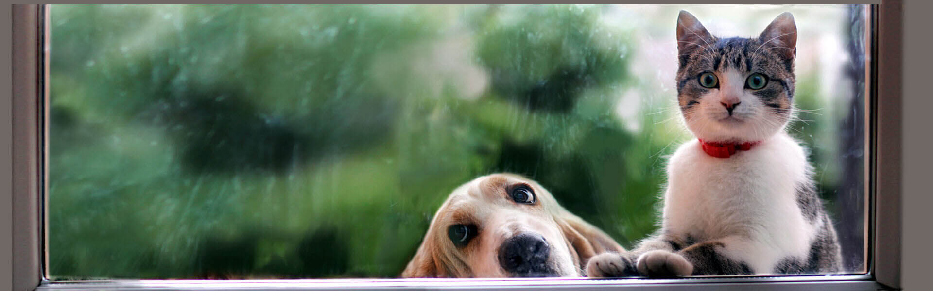 Give you and your pet's independence with Pet Door Products Sliding Glass doors