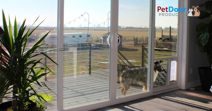 Choosing a Pet Door by Location