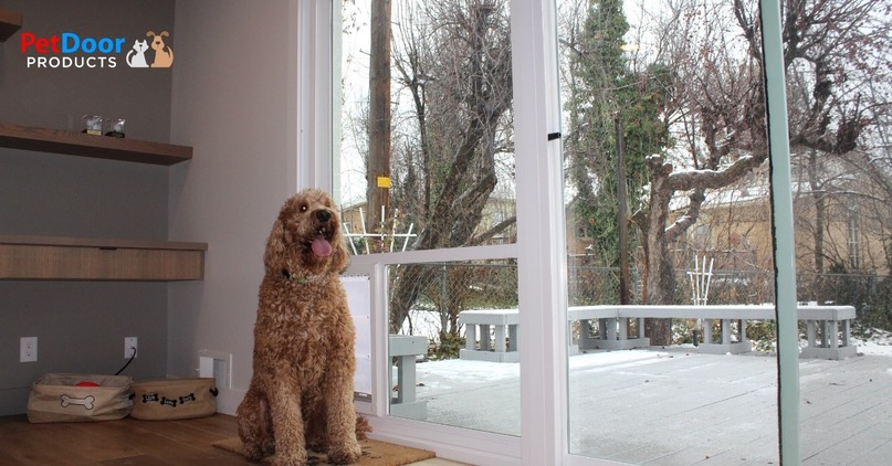 Happy Dog Sitting in Front of the Pet Door